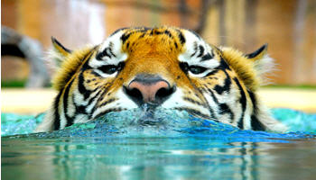 Australia Zoo Bindi Irwin Celebrates 11th Birthday FREE